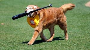 Chase Thunder Bat Dog