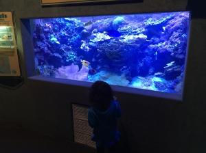 Jenkinsons Aquarium 02