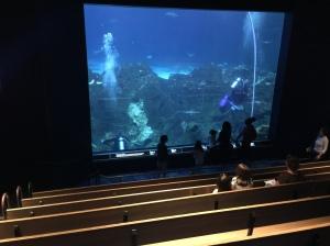 Adv Aquarium 2016 04