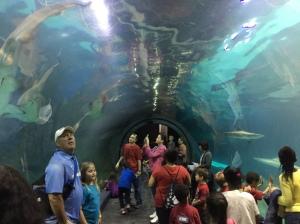 Adv Aquarium 2016 05