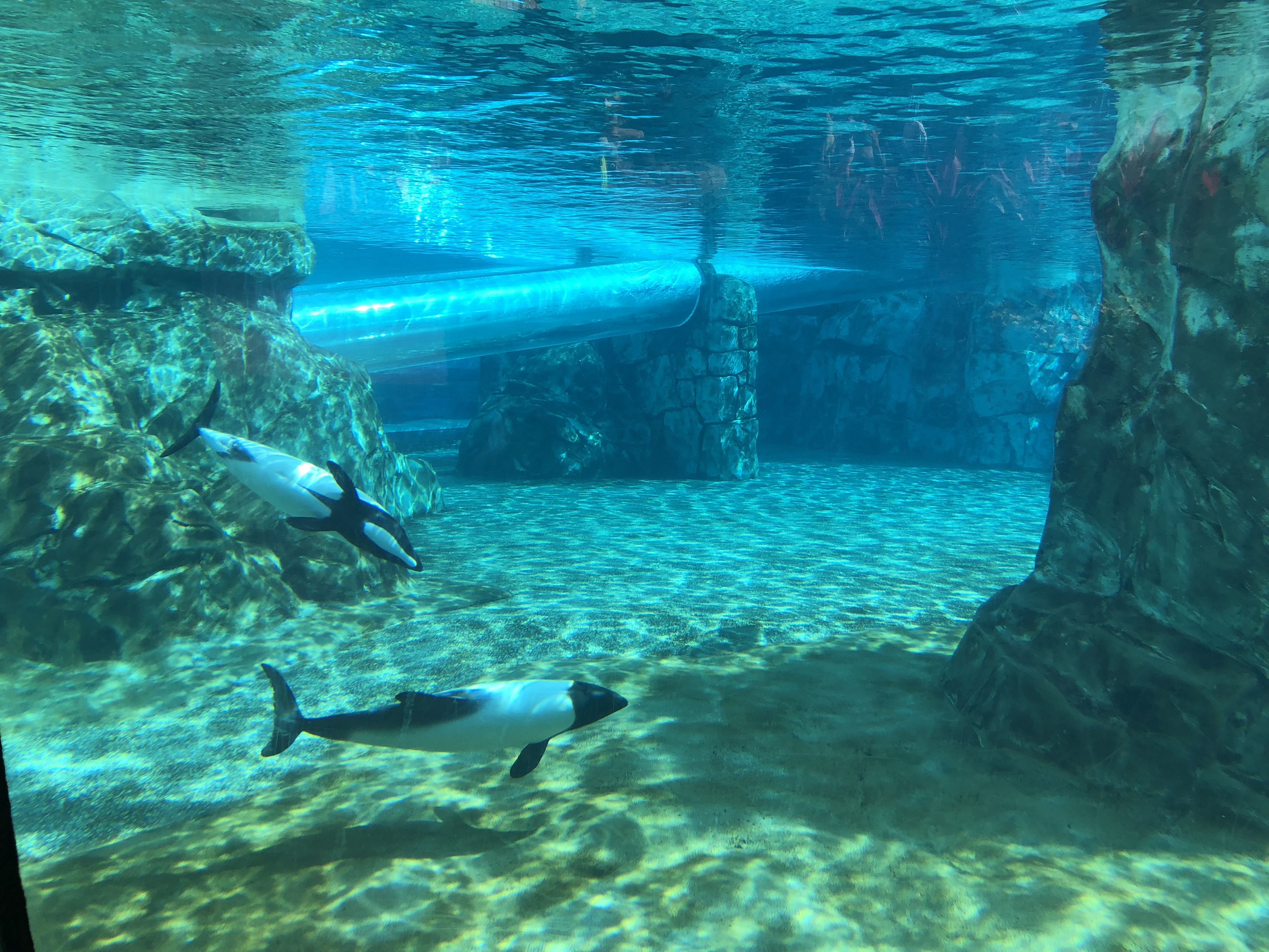 underwater water slide. Just To The Right Side Of Dolphin Viewing Area Is Where Penny Machine Was Located. Underwater Water Slide
